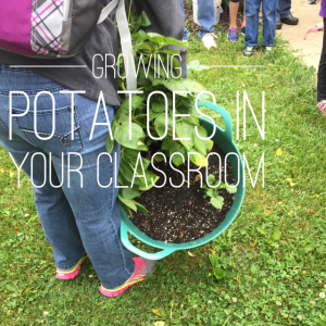 Growing Potatoes in your classroom
